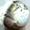 Vos noms de planètes / lunes - Page 3 3d9115119b859eaae26001a3e1afc9